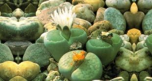İlginç Bitkiler